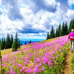 Hiking through wildflowers near our Sequim Waterfront Cottages