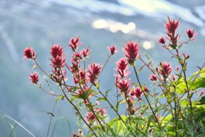 Wildflowers bloom on these popular Hikes Near our Beachfront Cottages in Sequim