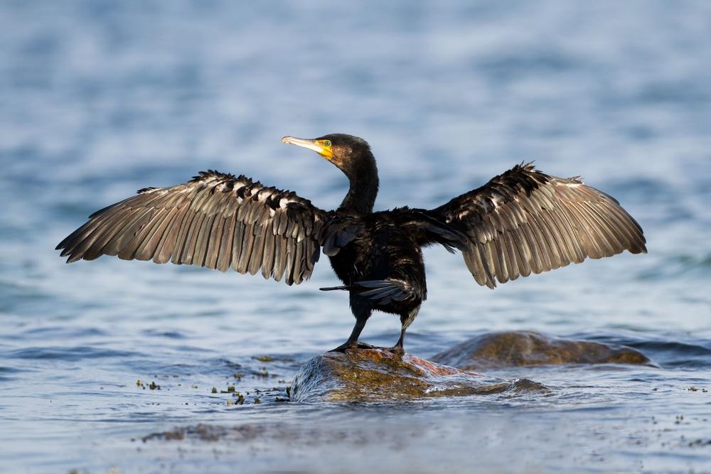 Protection Island bird migration tours